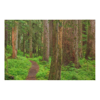 Scenic of old growth forest wood prints