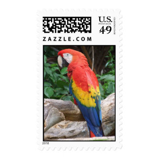 Scenic Scarlet Macaw Postage Stamps