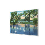 Scenic View of Swans on the Lake Canvas Print