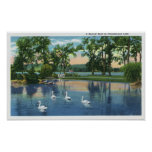 Scenic View of Swans on the Lake Print