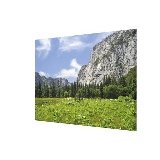Scenic Yosemite Valley, California Canvas Print