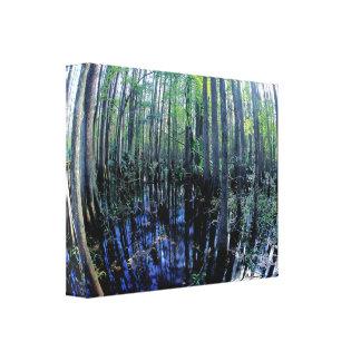 Scenics - Photos - Wetlands - Sebring Hammock Canvas Prints