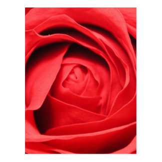 Scent of a Rose Postcard