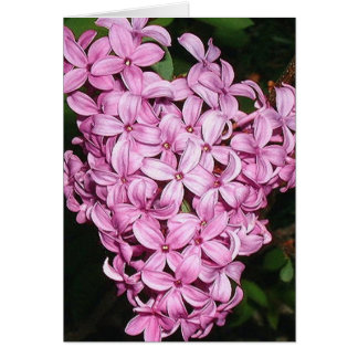 Scent of LIlacs Greeting Card