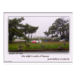 Scent of Rain Post Card