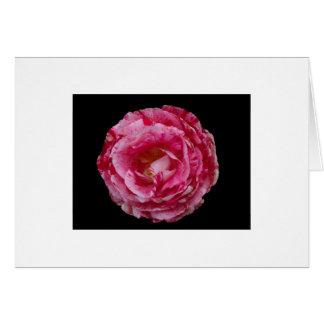 Scentimental Floribunda Rose Notecard