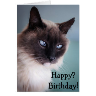 Grumpy cat birthday gifts on zazzle sceptical or grumpy cat happy birthday card bookmarktalkfo Image collections