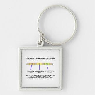 Schema Of A Transcription Factor (Protein) Keychain