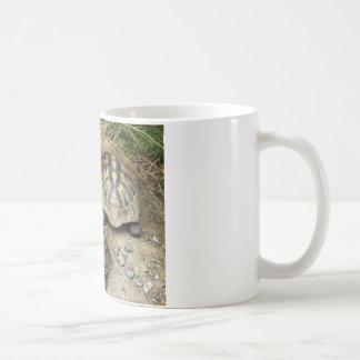 Schildis Taza De Café