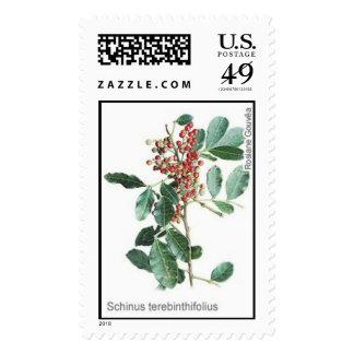 Schinus terebinthifolius postage