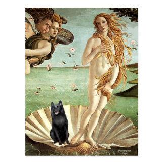 Schipperke 5 - Birth of Venus Postcard