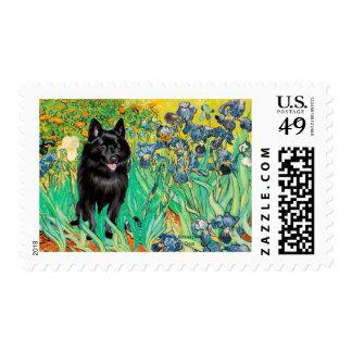 Schipperke 7 - Irises Postage Stamp