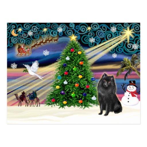 Schipperke de la magia del navidad tarjetas postales