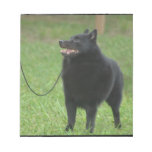 Schipperke Dog Memo Pads