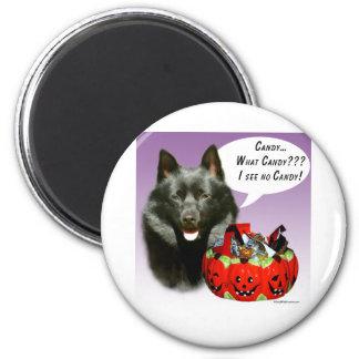 Schipperke Halloween Candy Magnet