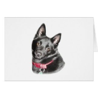 Schipperke Picture Stationery Note Card
