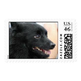 Schipperke Postage Stamp