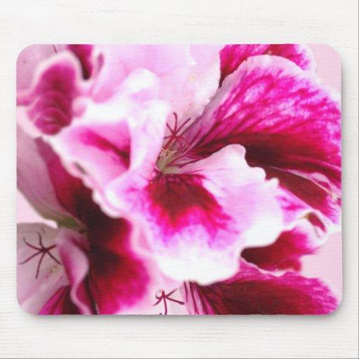 Schizanthus romántico florece Mousepad