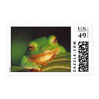 Schlegel's green tree frog postage