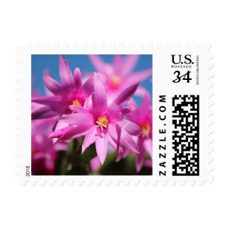 Schlumbergera Pink Christmas Cactus Flower Stamp