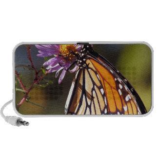 Schmetterlin en flor altavoces de viaje