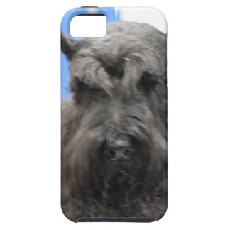 schnauzer-24.jpg iPhone 5 covers