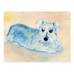 Schnauzer Andy Post Cards