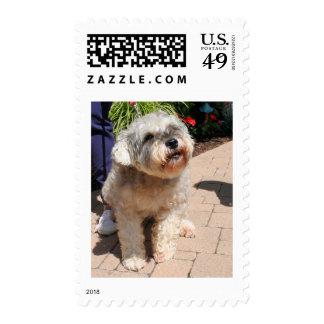 Schnauzer Bogie 1 Stamps