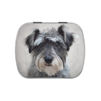Schnauzer Jelly Belly Candy Tins