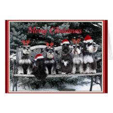 Schnauzer Christmas Card at Zazzle