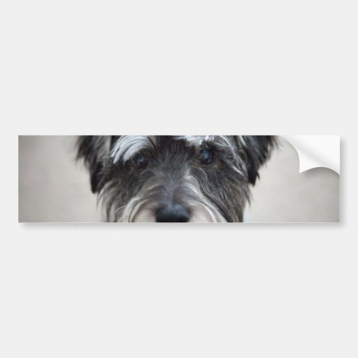 Schnauzer Dog Bumper Sticker Car Bumper Sticker