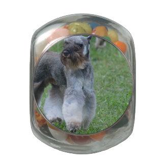 Schnauzer Dog Jelly Belly Candy Jars