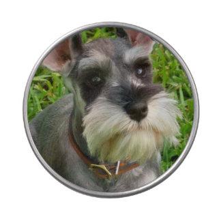 Schnauzer Dog Jelly Belly Tins