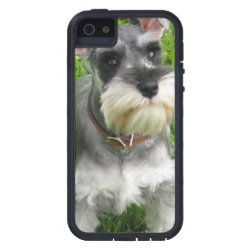 Schnauzer Dog iPhone SE/5/5s Case