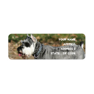Schnauzer dog custom return address labels