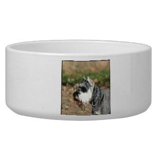 Schnauzer dog dog food bowls