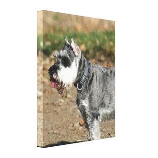 Schnauzer dog gallery wrapped canvas