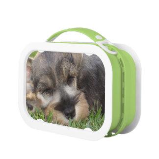 Schnauzer Dog Lunchbox