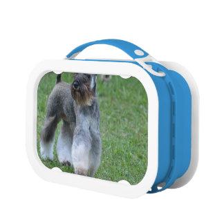 Schnauzer Dog Yubo Lunchbox