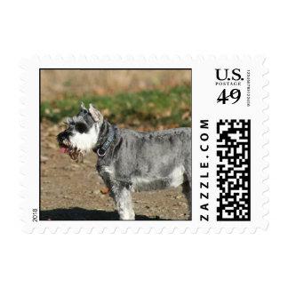 Schnauzer dog postage stamp