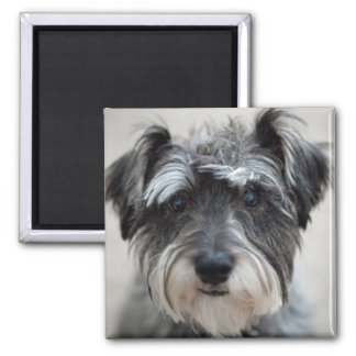 Schnauzer Dog Square Magnet Fridge Magnets