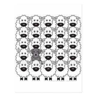 Schnauzer en las ovejas postal