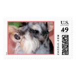 Schnauzer in Deep Thought Postage Stamp