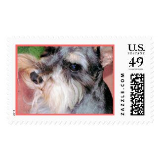 Schnauzer in Deep Thought Stamp