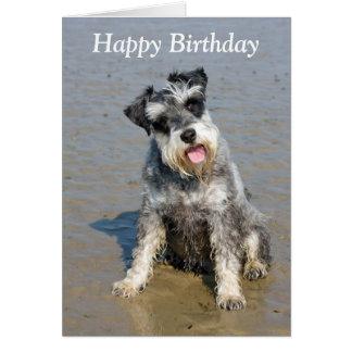 Schnauzer miniature dog beach photo birthday card