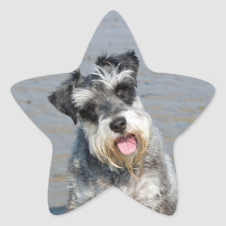 Schnauzer miniature dog cute beautiful photo beach star sticker