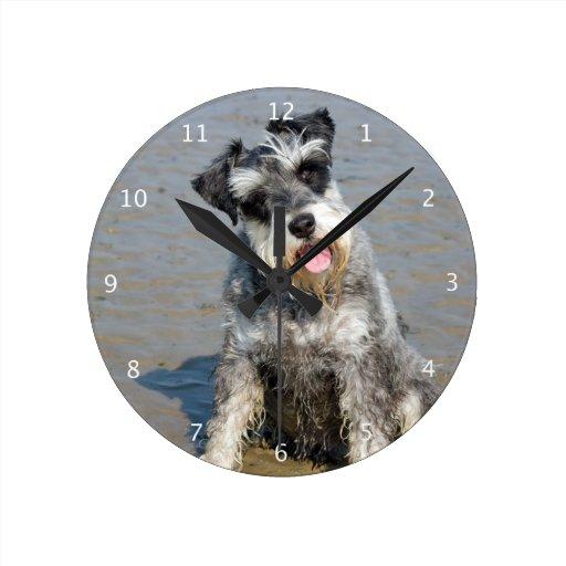 Schnauzer Miniature Dog Cute Photo At Beach Gift Round