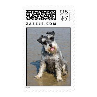 Schnauzer miniature dog cute photo at beach, stamp