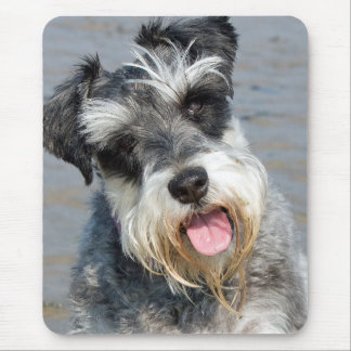 Schnauzer miniature dog cute photo portrait, gift mouse pad