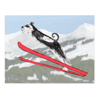Schnauzer on Skis! Postcard